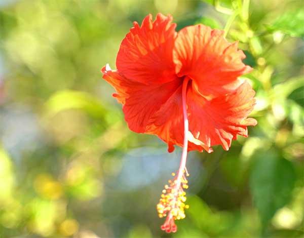 バリの美しい花